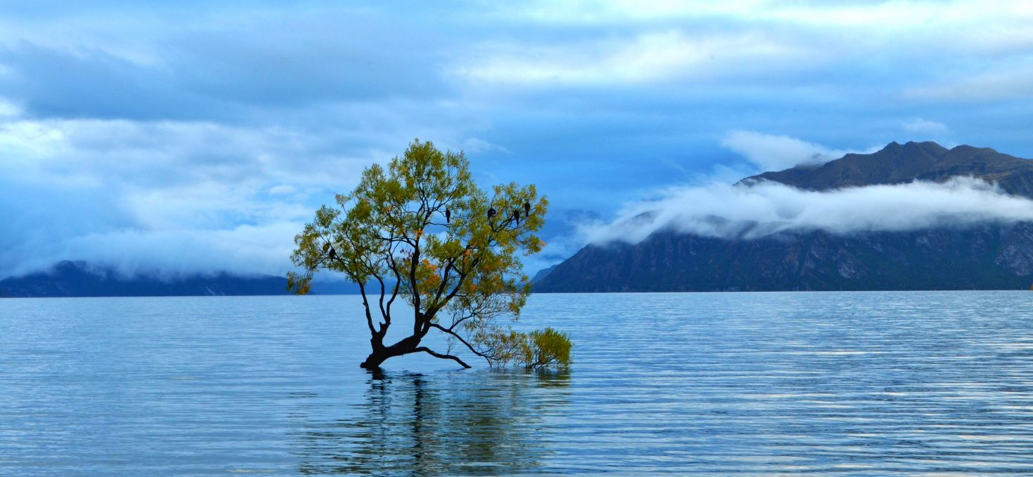 New Zealand – What, Where, How